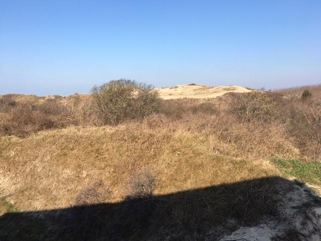 Vue sur les dunes (vue réelle)